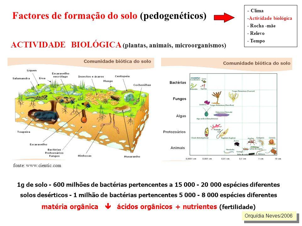 Factores de formação do solo (pedogenéticos) ACTIVIDADE BIOLÓGICA (plantas, animais, microorganismos) - Clima -Actividade biológica - Rocha -mãe - Rel