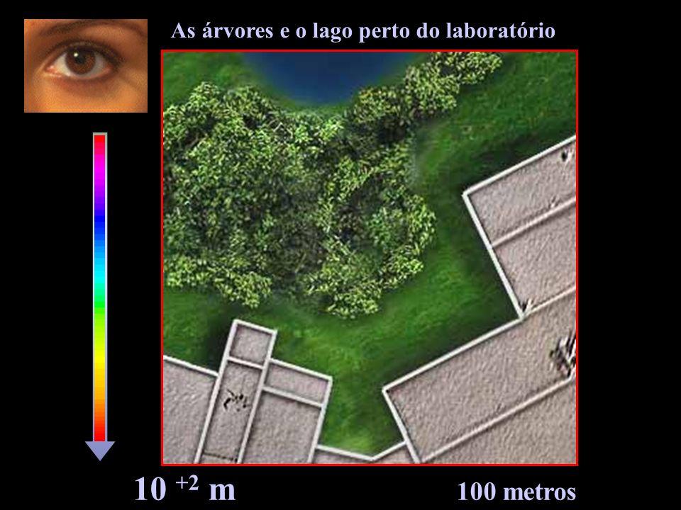 10 +2 m 100 metros As árvores e o lago perto do laboratório