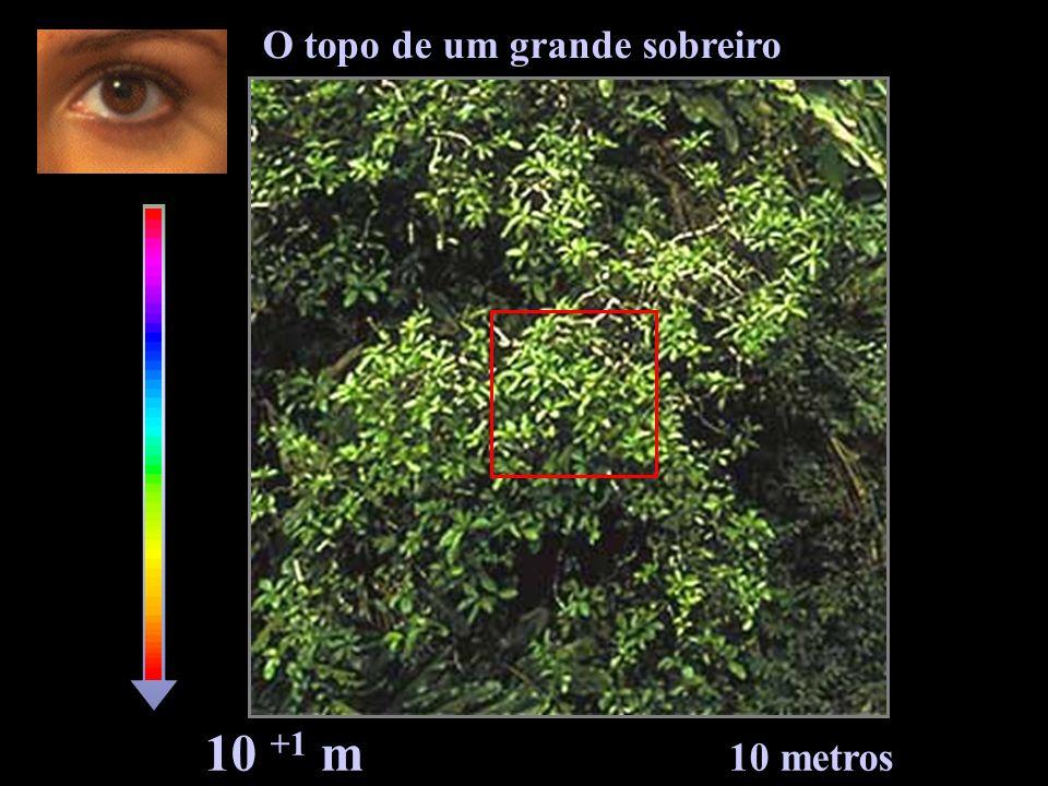 10 +0 m 1 metro Ramos e folhas do sobreiro