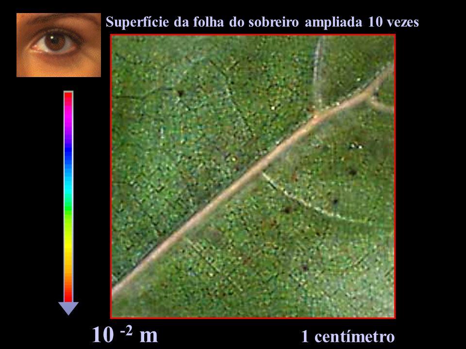 10 -2 m 1 centímetro Superfície da folha do sobreiro ampliada 10 vezes
