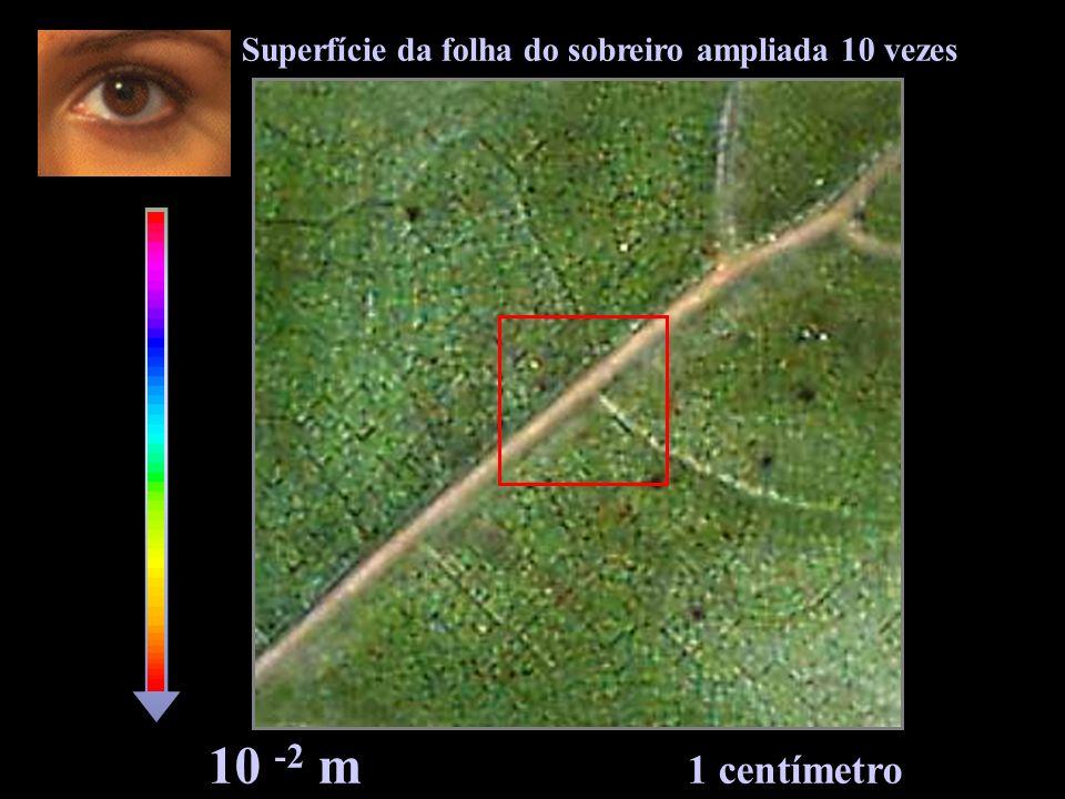 10 -3 m 1 milímetro Superfície da folha do sobreiro ampliada 100 vezes
