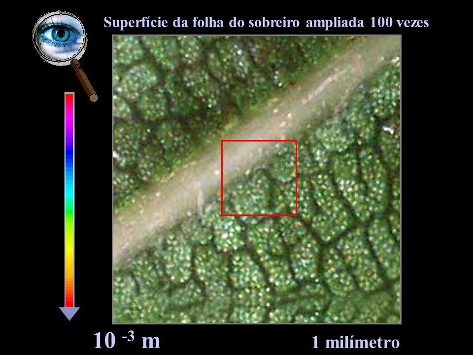 10 -4 m 100 mícrones Células da superfície da folha