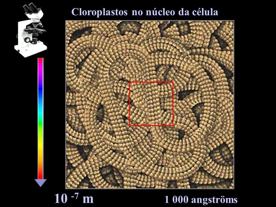 10 -8 m 100 angströms Cadeias de DNA no núcleo da célula