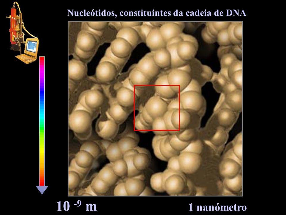 10 -9 m 1 nanómetro Nucleótidos, constituintes da cadeia de DNA