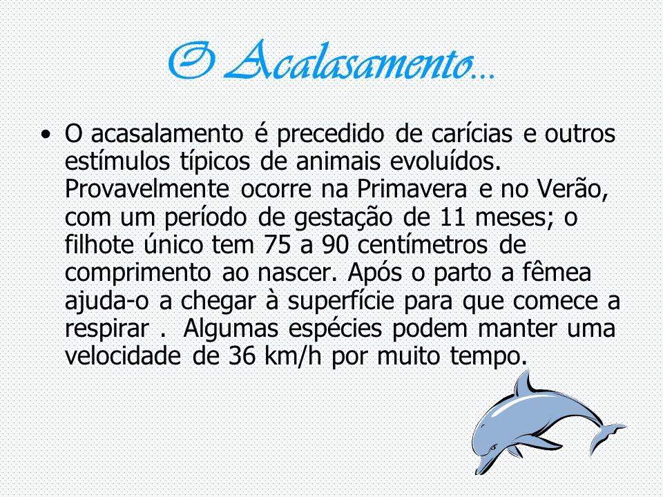 O Acalasamento… O acasalamento é precedido de carícias e outros estímulos típicos de animais evoluídos.