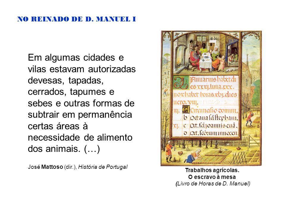NO REINADO DE D. MANUEL I Em algumas cidades e vilas estavam autorizadas devesas, tapadas, cerrados, tapumes e sebes e outras formas de subtrair em pe