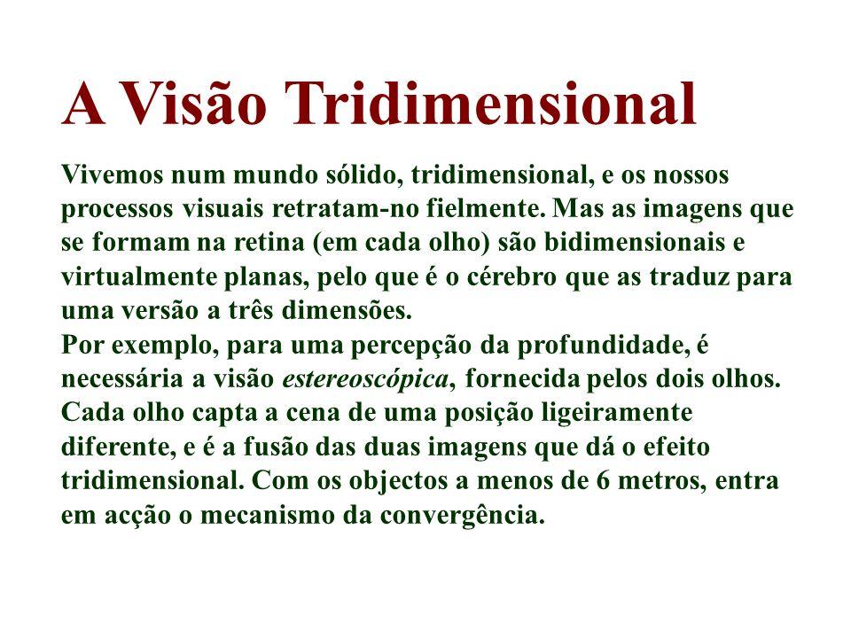 A Visão Tridimensional Vivemos num mundo sólido, tridimensional, e os nossos processos visuais retratam-no fielmente. Mas as imagens que se formam na
