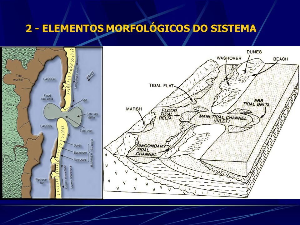 2 - 2 - ELEMENTOS MORFOLÓGICOS DO SISTEMA