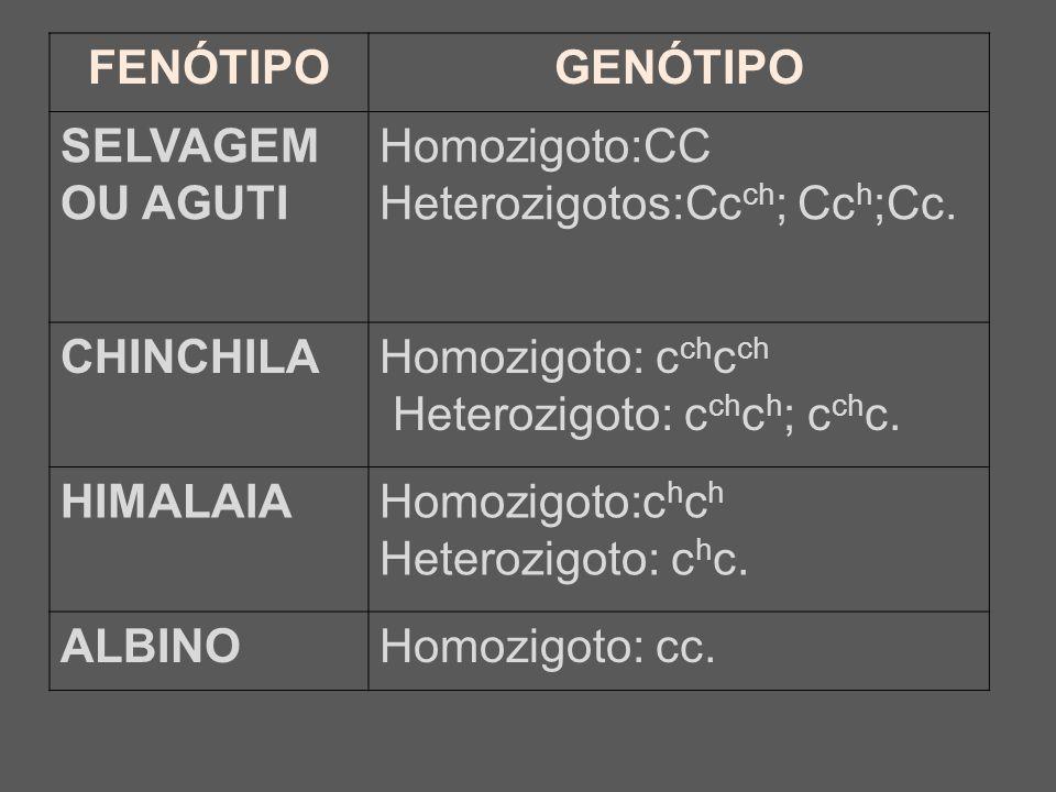 FENÓTIPOGENÓTIPO SELVAGEM OU AGUTI Homozigoto:CC Heterozigotos:Cc ch ; Cc h ;Cc. CHINCHILAHomozigoto: c ch c ch Heterozigoto: c ch c h ; c ch c. HIMAL