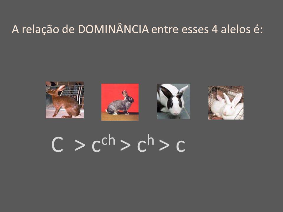C > c ch > c h > c A relação de DOMINÂNCIA entre esses 4 alelos é: