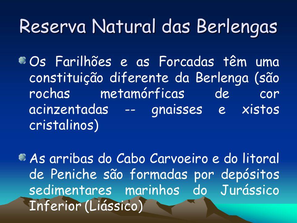 Reserva Natural das Berlengas Os Farilhões e as Forcadas têm uma constituição diferente da Berlenga (são rochas metamórficas de cor acinzentadas -- gn