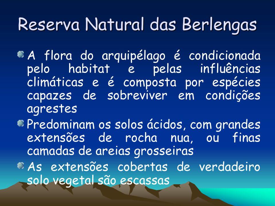 Reserva Natural das Berlengas A flora do arquipélago é condicionada pelo habitat e pelas influências climáticas e é composta por espécies capazes de s