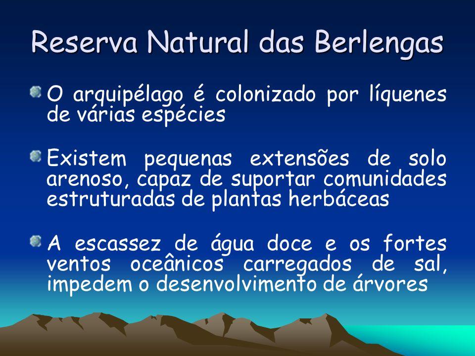 Reserva Natural das Berlengas O arquipélago é colonizado por líquenes de várias espécies Existem pequenas extensões de solo arenoso, capaz de suportar