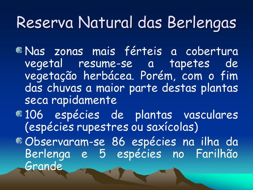 Reserva Natural das Berlengas Nas zonas mais férteis a cobertura vegetal resume-se a tapetes de vegetação herbácea. Porém, com o fim das chuvas a maio