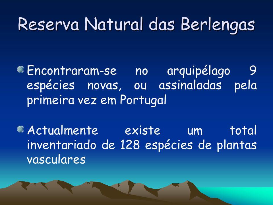 Reserva Natural das Berlengas Encontraram-se no arquipélago 9 espécies novas, ou assinaladas pela primeira vez em Portugal Actualmente existe um total