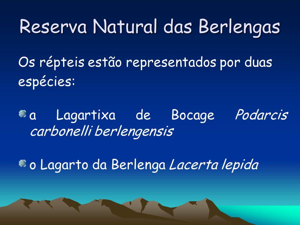 Reserva Natural das Berlengas Os répteis estão representados por duas espécies: a Lagartixa de Bocage Podarcis carbonelli berlengensis o Lagarto da Be