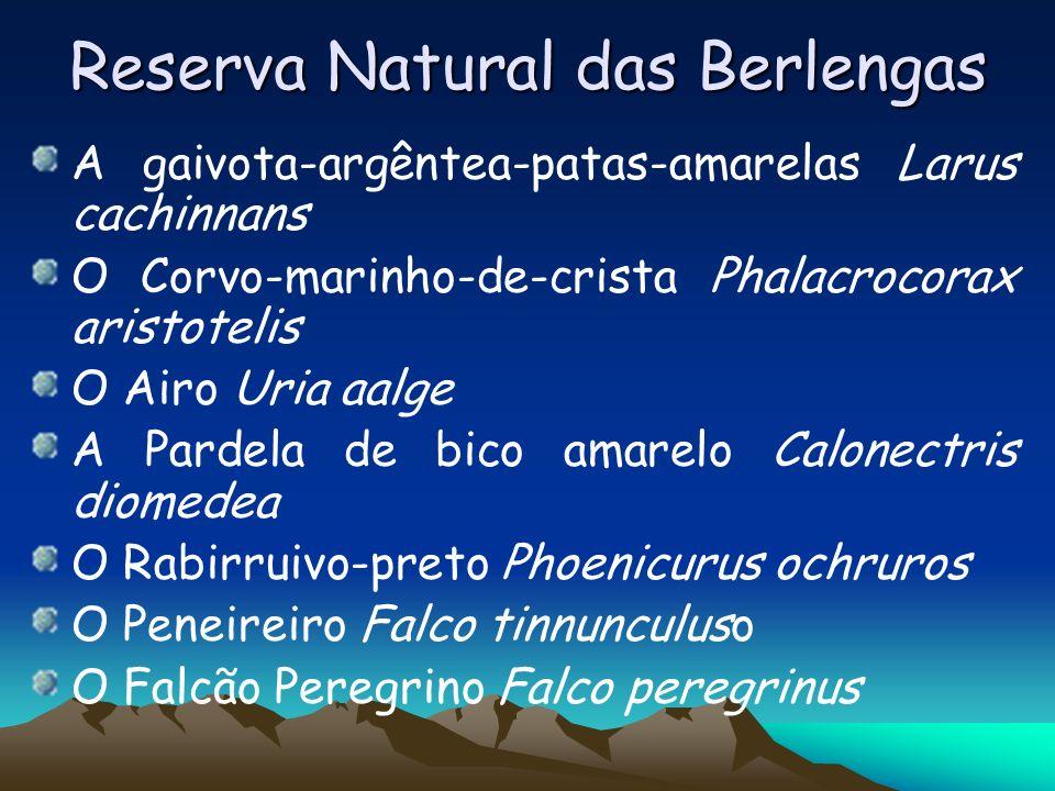 Reserva Natural das Berlengas A gaivota-argêntea-patas-amarelas Larus cachinnans O Corvo-marinho-de-crista Phalacrocorax aristotelis O Airo Uria aalge