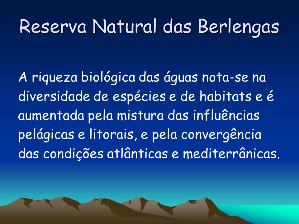 Reserva Natural das Berlengas A riqueza biológica das águas nota-se na diversidade de espécies e de habitats e é aumentada pela mistura das influência