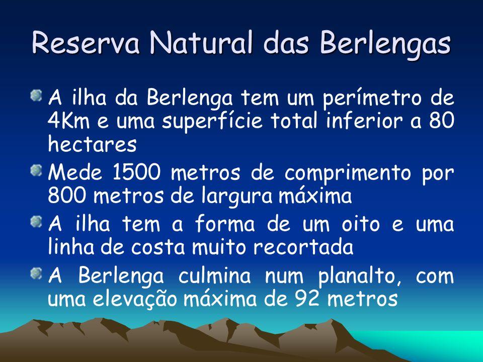 Reserva Natural das Berlengas A ilha da Berlenga tem um perímetro de 4Km e uma superfície total inferior a 80 hectares Mede 1500 metros de comprimento