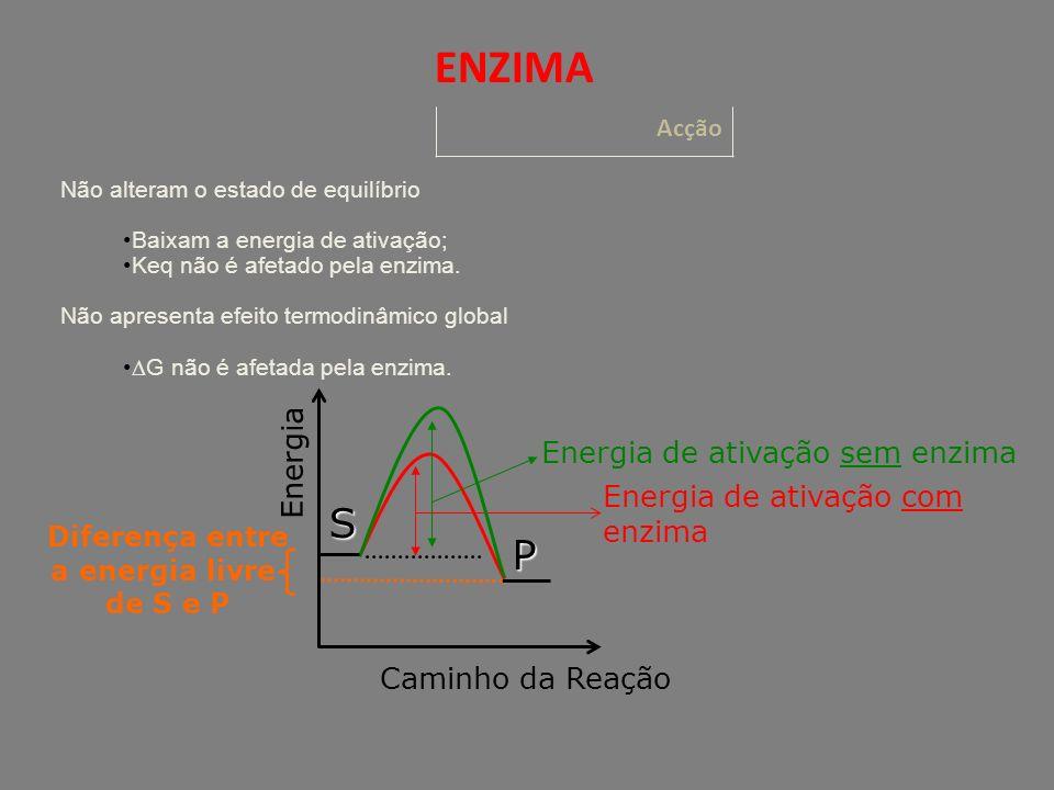 Diferença entre a energia livre de S e P Caminho da Reação Energia de ativação com enzima Energia Energia de ativação sem enzima S P Não alteram o estado de equilíbrio Baixam a energia de ativação; Keq não é afetado pela enzima.
