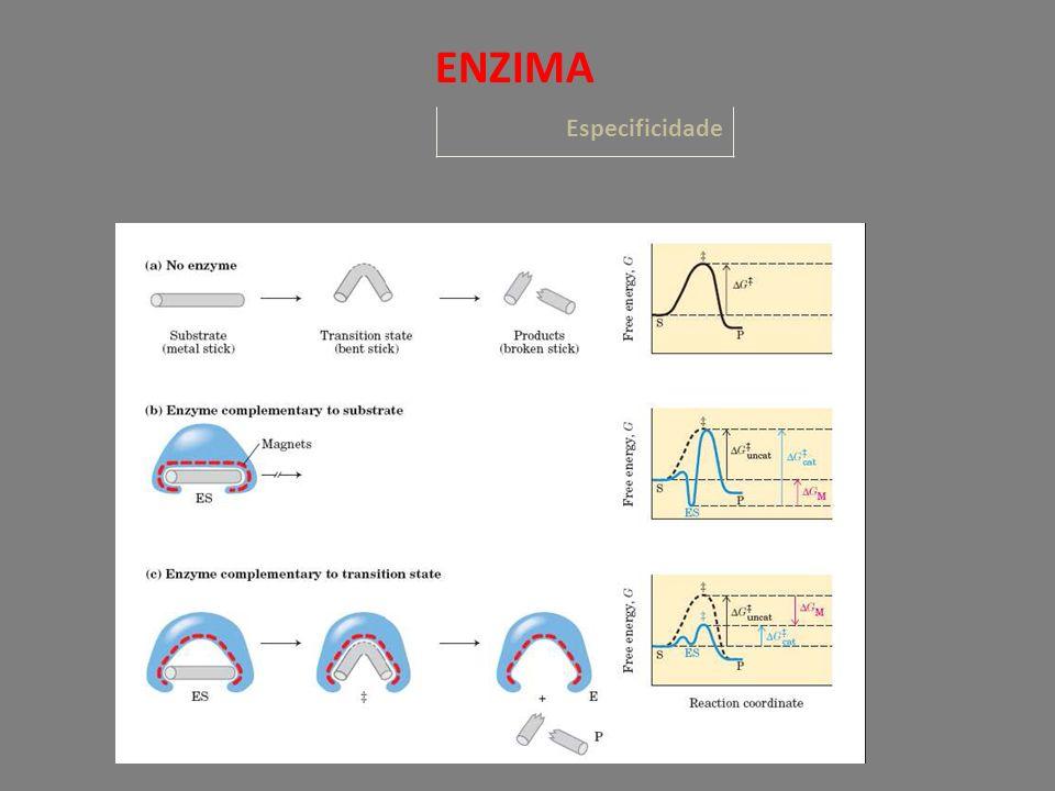 Especificidade ENZIMA