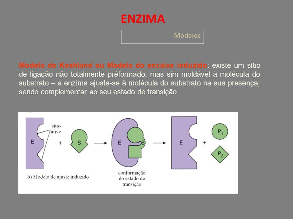 Modelo de Koshland ou Modelo do encaixe induzido: existe um sítio de ligação não totalmente préformado, mas sim moldável à molécula do substrato – a enzima ajusta-se à molécula do substrato na sua presença, sendo complementar ao seu estado de transição Modelos ENZIMA