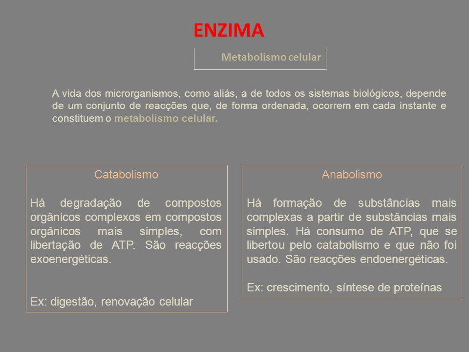 ENZIMA Metabolismo celular A vida dos microrganismos, como aliás, a de todos os sistemas biológicos, depende de um conjunto de reacções que, de forma ordenada, ocorrem em cada instante e constituem o metabolismo celular.