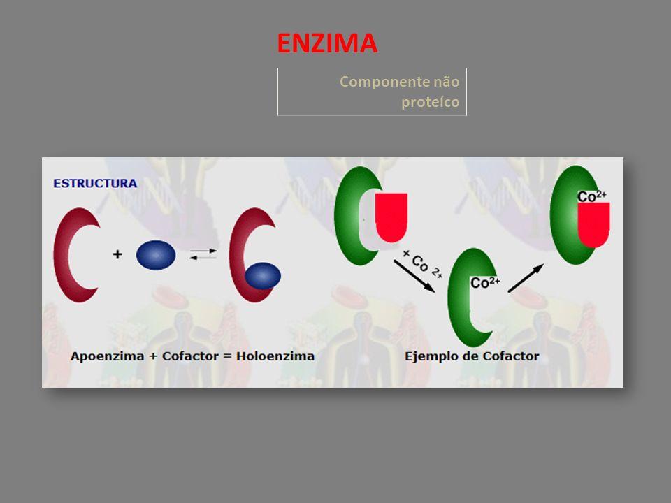 Componente não proteíco ENZIMA