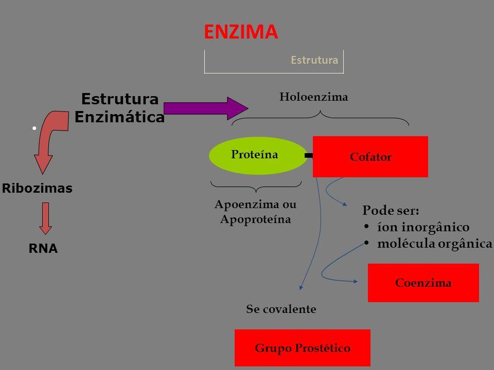Estrutura ENZIMA RNA Estrutura Enzimática Ribozimas Se covalente Apoenzima ou Apoproteína Holoenzima Cofator Proteína Pode ser: íon inorgânico molécula orgânica Coenzima Grupo Prostético Cofator