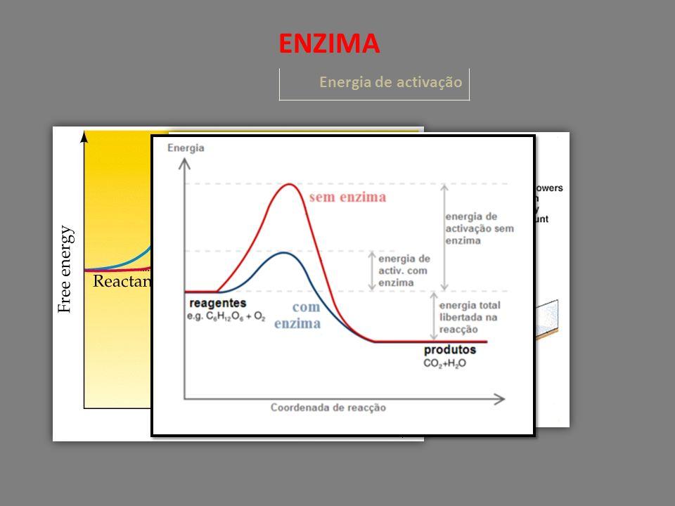 ENZIMA Energia de activação