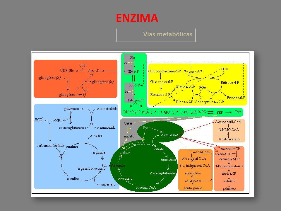Vias metabólicas ENZIMA