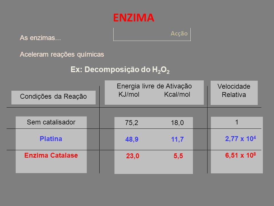 Acção ENZIMA As enzimas...