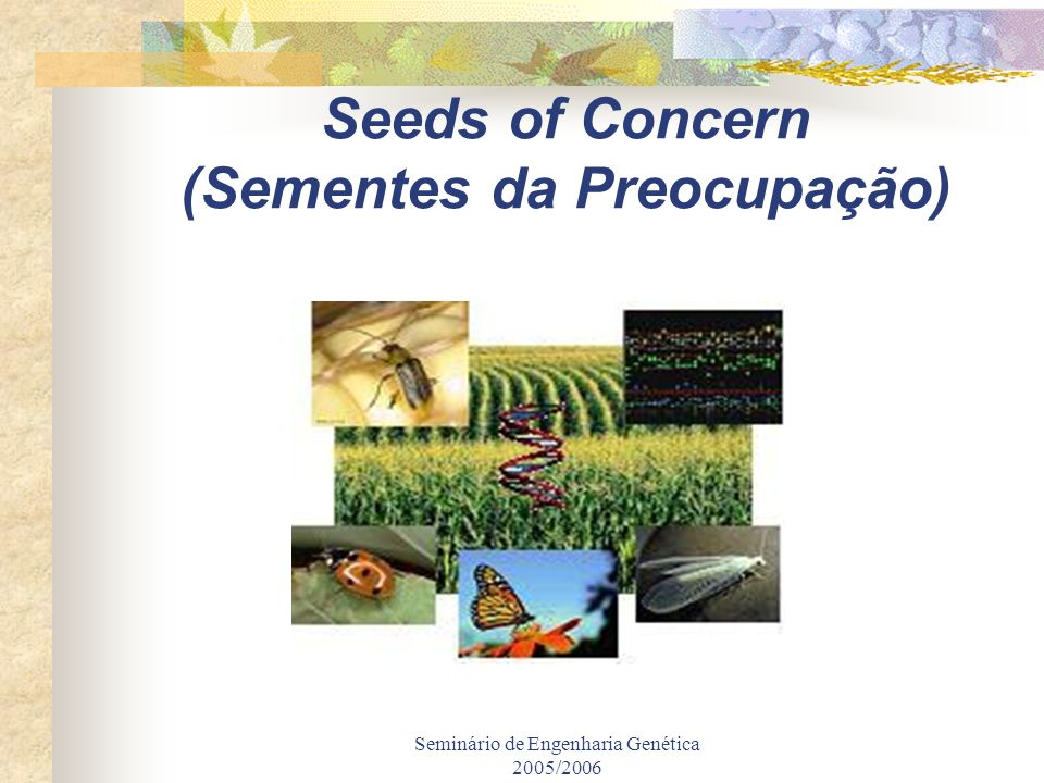 Seminário de Engenharia Genética 2005/2006 Seeds of Concern (Sementes da Preocupação)