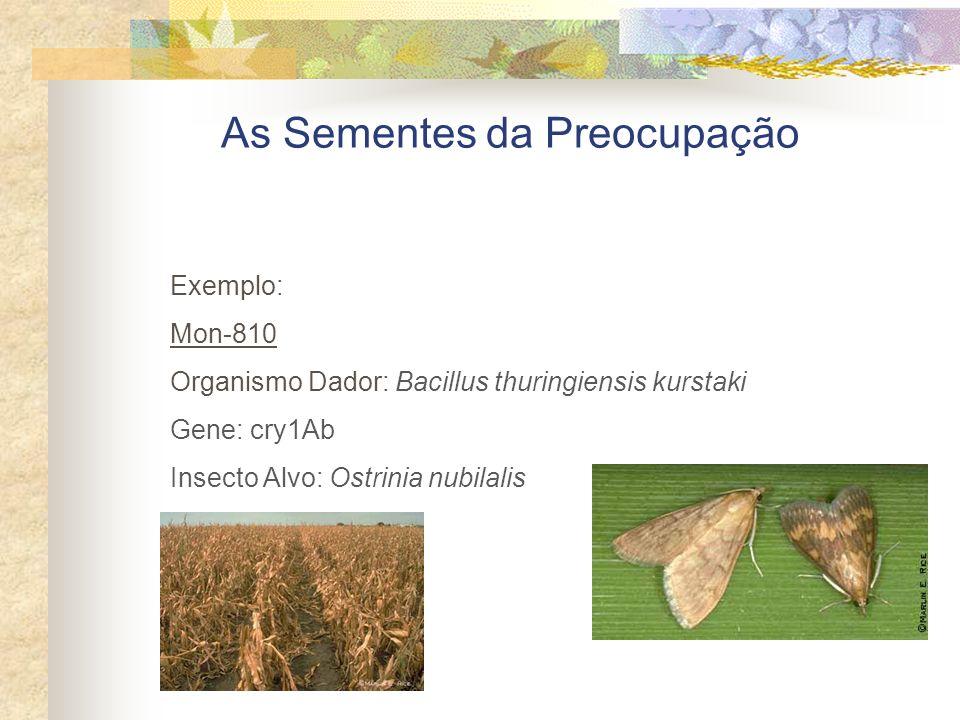 As Sementes da Preocupação Exemplo: Mon-810 Organismo Dador: Bacillus thuringiensis kurstaki Gene: cry1Ab Insecto Alvo: Ostrinia nubilalis