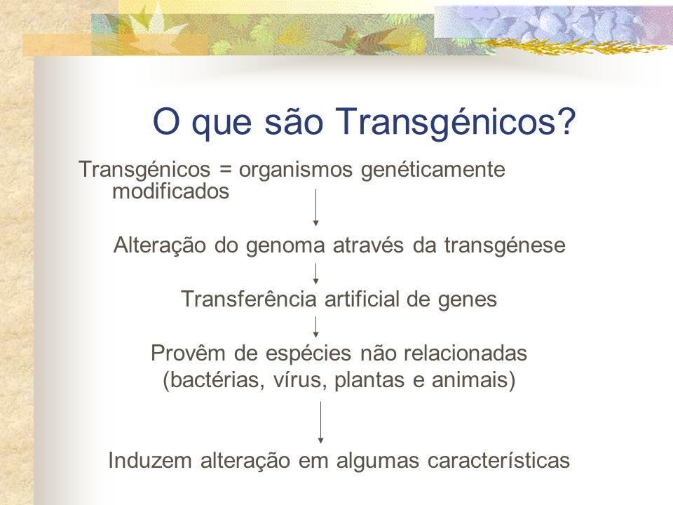 O que são Transgénicos? Transgénicos = organismos genéticamente modificados Alteração do genoma através da transgénese Transferência artificial de gen