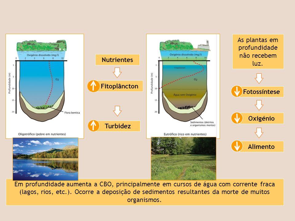 Nutrientes As plantas em profundidade não recebem luz. Fitoplâncton Turbidez Fotossíntese Oxigénio Alimento Em profundidade aumenta a CBO, principalme