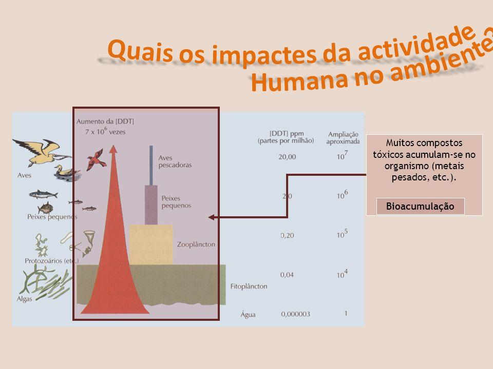 Muitos compostos tóxicos acumulam-se no organismo (metais pesados, etc.). Bioacumulação