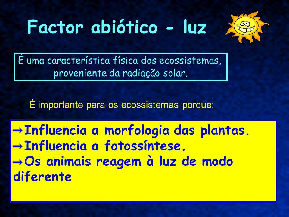 Factor abiótico - luz É uma característica física dos ecossistemas, proveniente da radiação solar. Influencia a morfologia das plantas. Influencia a f