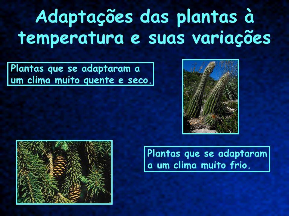 Adaptações das plantas à temperatura e suas variações Plantas que se adaptaram a um clima muito frio. Plantas que se adaptaram a um clima muito quente