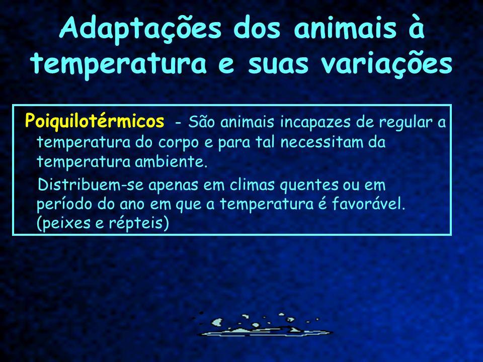 Adaptações dos animais à temperatura e suas variações Poiquilotérmicos - São animais incapazes de regular a temperatura do corpo e para tal necessitam
