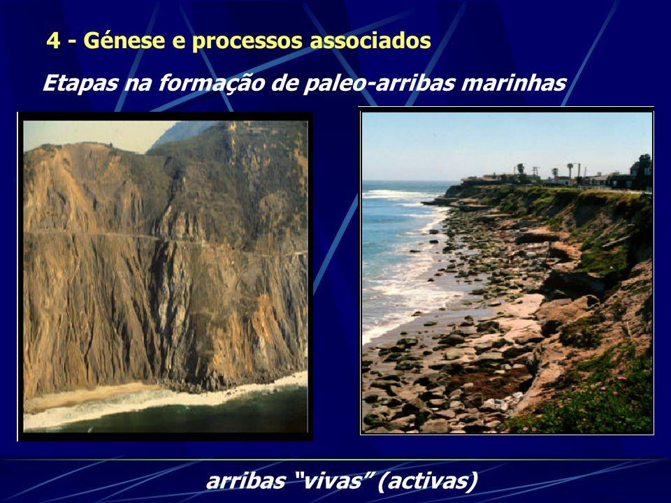 4 - Génese e processos associados Etapas na formação de paleo-arribas marinhas arribas vivas (activas)