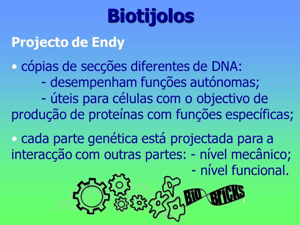 Biotijolos Projecto de Endy cópias de secções diferentes de DNA: - desempenham funções autónomas; - úteis para células com o objectivo de produção de
