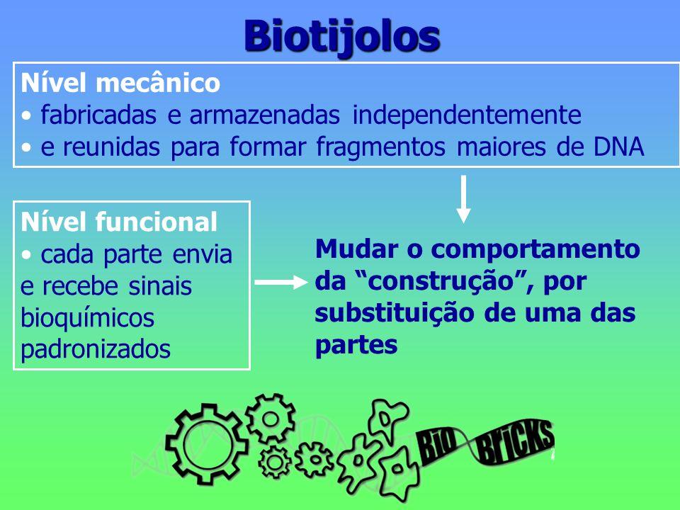 Biotijolos Nível mecânico fabricadas e armazenadas independentemente e reunidas para formar fragmentos maiores de DNA Nível funcional cada parte envia e recebe sinais bioquímicos padronizados Mudar o comportamento da construção, por substituição de uma das partes
