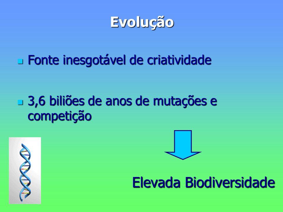 Evolução Fonte inesgotável de criatividade Fonte inesgotável de criatividade 3,6 biliões de anos de mutações e competição 3,6 biliões de anos de mutações e competição Elevada Biodiversidade