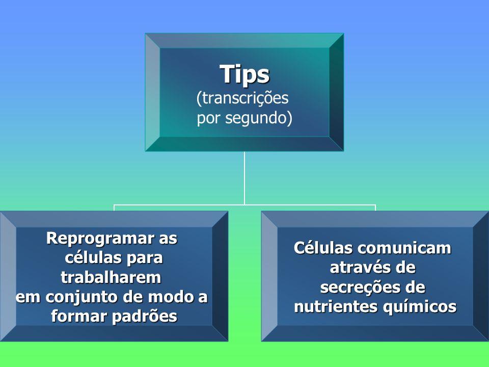 Tips (transcrições por segundo) Reprogramar as células para trabalharem em conjunto de modo a formar padrões Células comunicam através de secreções de nutrientes químicos