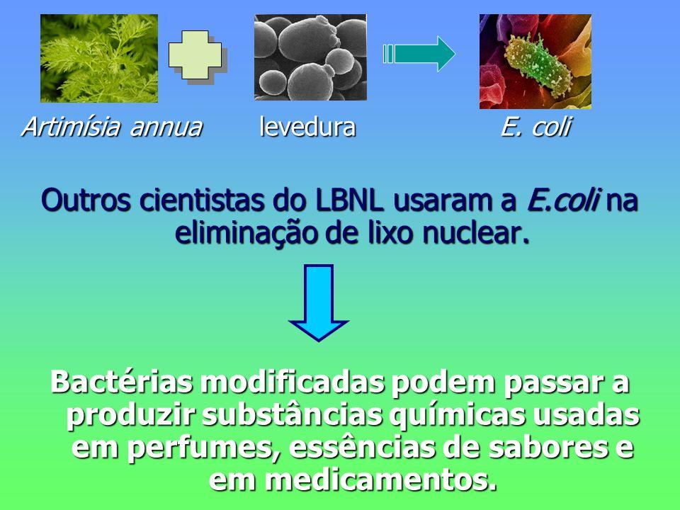 Artimísia annua levedura E. coli Outros cientistas do LBNL usaram a E.coli na eliminação de lixo nuclear. Bactérias modificadas podem passar a produzi