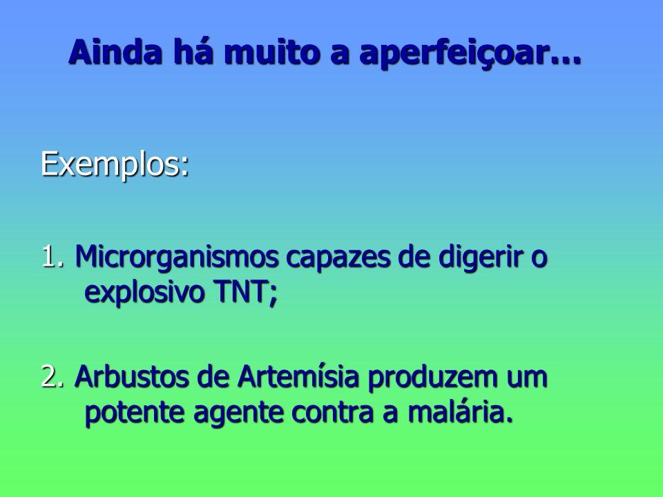Ainda há muito a aperfeiçoar… Exemplos: 1. Microrganismos capazes de digerir o explosivo TNT; 2. Arbustos de Artemísia produzem um potente agente cont