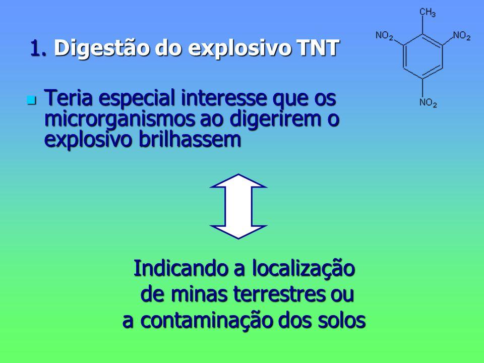 1. Digestão do explosivo TNT Teria especial interesse que os microrganismos ao digerirem o explosivo brilhassem Teria especial interesse que os micror