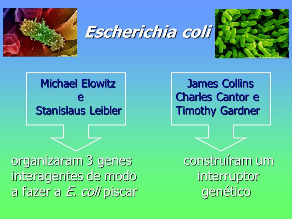 Escherichia coli Escherichia coli Michael Elowitz James Collins Michael Elowitz James Collins e Charles Cantor e e Charles Cantor e Stanislaus Leibler Timothy Gardner Stanislaus Leibler Timothy Gardner organizaram 3 genes construíram um organizaram 3 genes construíram um interagentes de modo interruptor interagentes de modo interruptor a fazer a E.