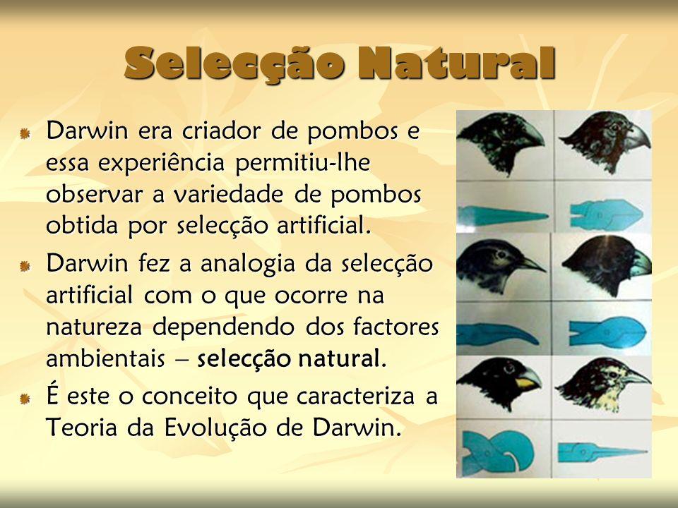 Selecção Natural Darwin era criador de pombos e essa experiência permitiu-lhe observar a variedade de pombos obtida por selecção artificial. Darwin fe